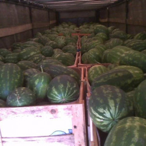 Watermelon 4-10 kg from Italy